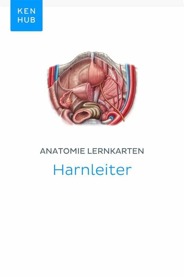Wunderbar Anatomie Und Physiologie Jenkins 3. Auflage Zeitgenössisch ...