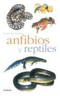 ANFIBIOS Y REPTILES - 9788430553341 - VV.AA.